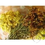 Трава Желтушник серый