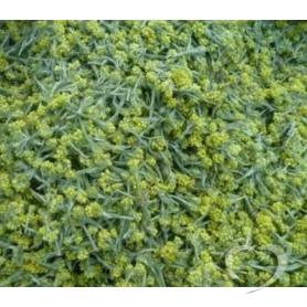 Бессмертник песчаный / Helichrysum arenarium (L) Moench.
