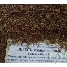 Вереск обыкновенный / Calluna vulgaris L.