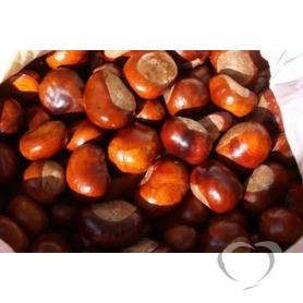 Каштан конский обыкновенный  плод/ Aesculus hippocastanum L.