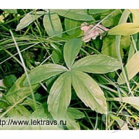 Лапчатка белая к50/ Potentilla alba L.