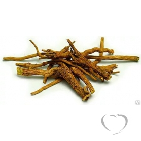 Шлемник байкальский (щитовка, щиток) / Scutellaria baicalensis Georgi