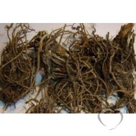 Валериана лекарственная / Valeriana officinalis L.